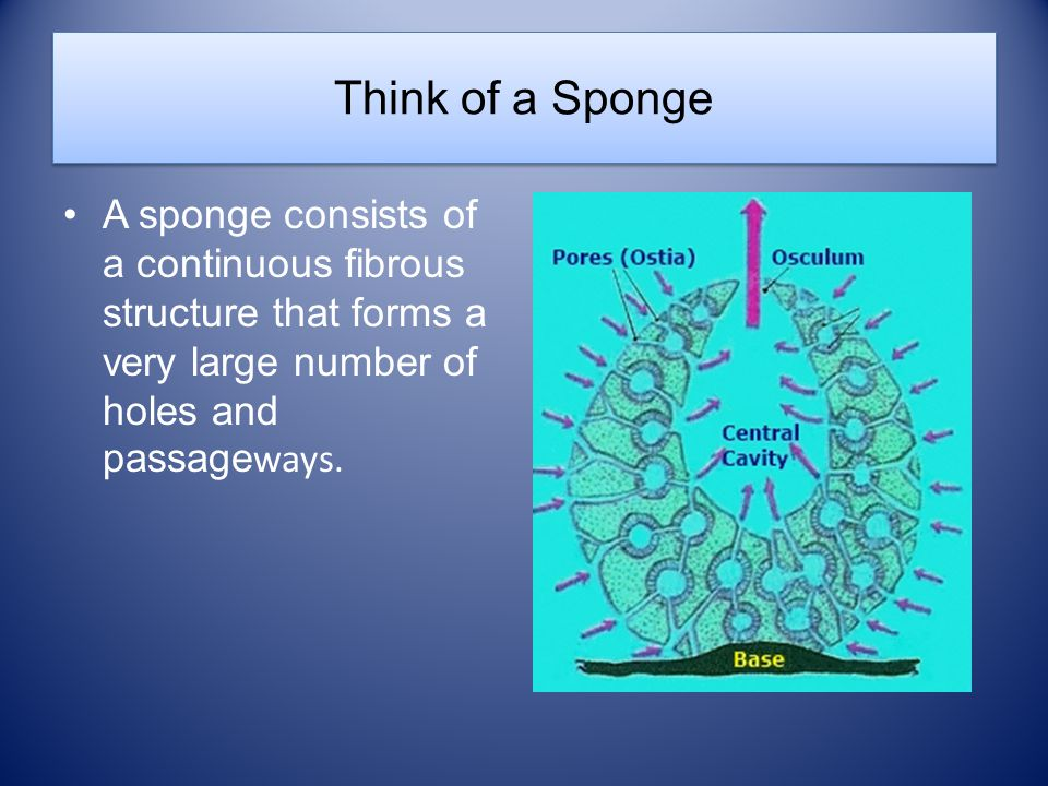 Think of a Sponge A sponge consists of a continuous fibrous structure that forms a very large number of holes and passage ways.