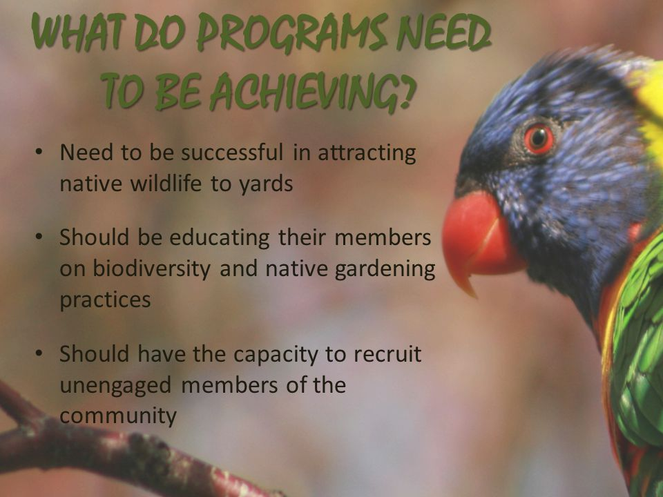 WHAT DO PROGRAMS NEED TO BE ACHIEVING.