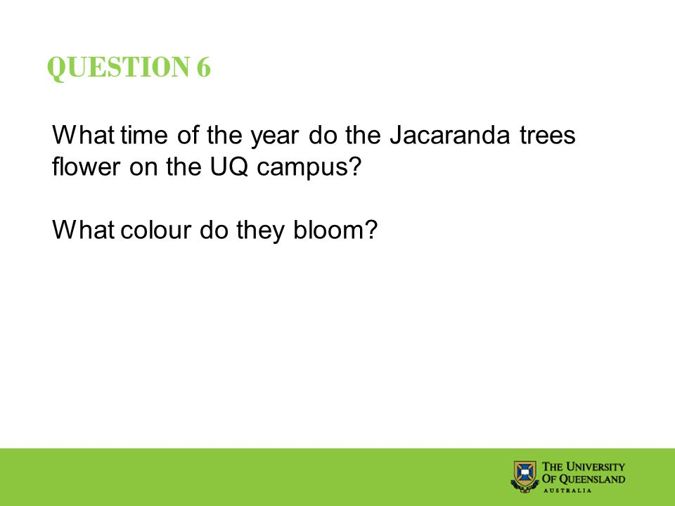 QUESTION 6 What time of the year do the Jacaranda trees flower on the UQ campus.