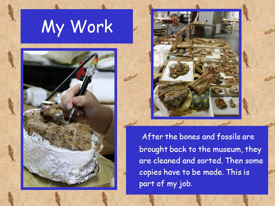 My Work After the bones and fossils are brought back to the museum, they are cleaned and sorted. Then some copies have to be made. This is part of my