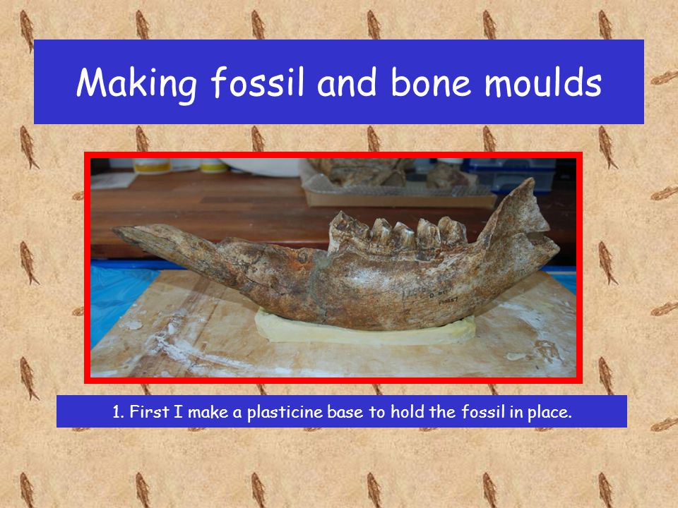 Making fossil and bone moulds 1. First I make a plasticine base to hold the fossil in place.