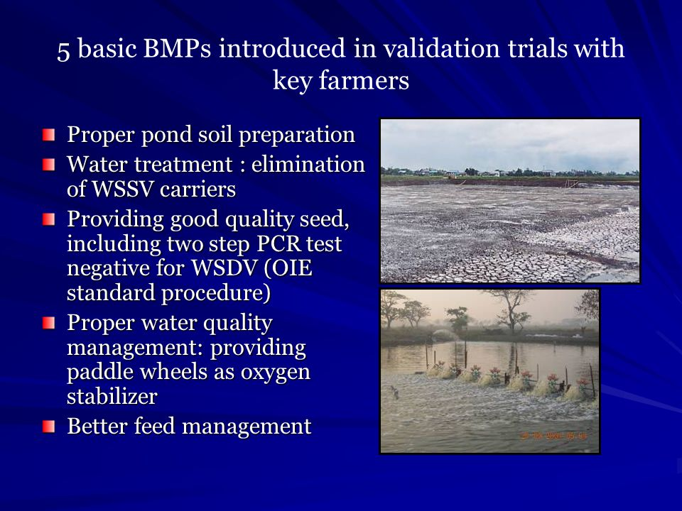 5 basic BMPs introduced in validation trials with key farmers Proper pond soil preparation Water treatment : elimination of WSSV carriers Providing go