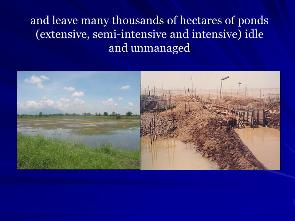 and leave many thousands of hectares of ponds (extensive, semi-intensive and intensive) idle and unmanaged