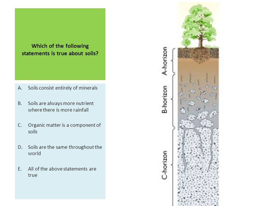 Which of the following statements is true about soils? A.Soils consist entirely of minerals B.Soils are always more nutrient where there is more rainf