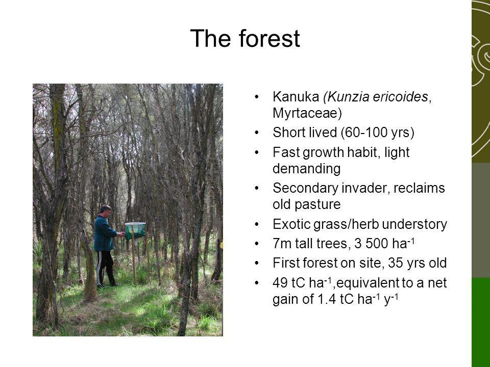 The forest Kanuka (Kunzia ericoides, Myrtaceae) Short lived (60-100 yrs) Fast growth habit, light demanding Secondary invader, reclaims old pasture Exotic grass/herb understory 7m tall trees, 3 500 ha -1 First forest on site, 35 yrs old 49 tC ha -1,equivalent to a net gain of 1.4 tC ha -1 y -1