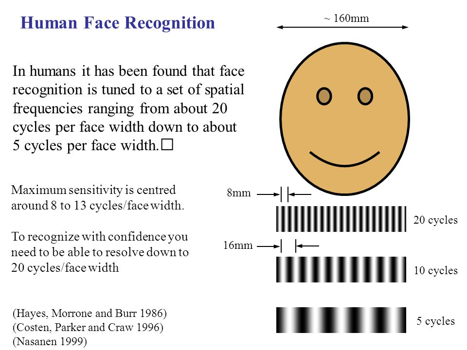 (Hayes, Morrone and Burr 1986) (Costen, Parker and Craw 1996) (Nasanen 1999) In humans it has been found that face recognition is tuned to a set of spatial frequencies ranging from about 20 cycles per face width down to about 5 cycles per face width.