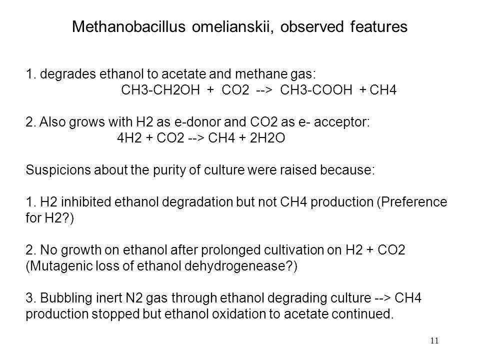 11 Methanobacillus omelianskii, observed features 1.
