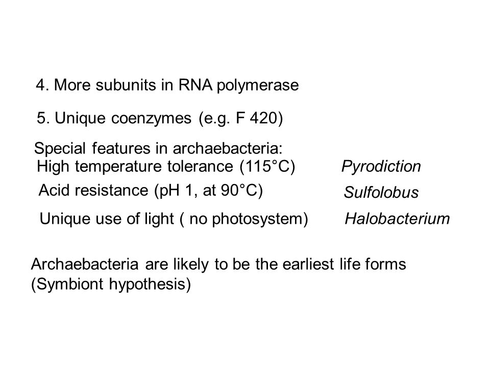 4. More subunits in RNA polymerase 5. Unique coenzymes (e.g.