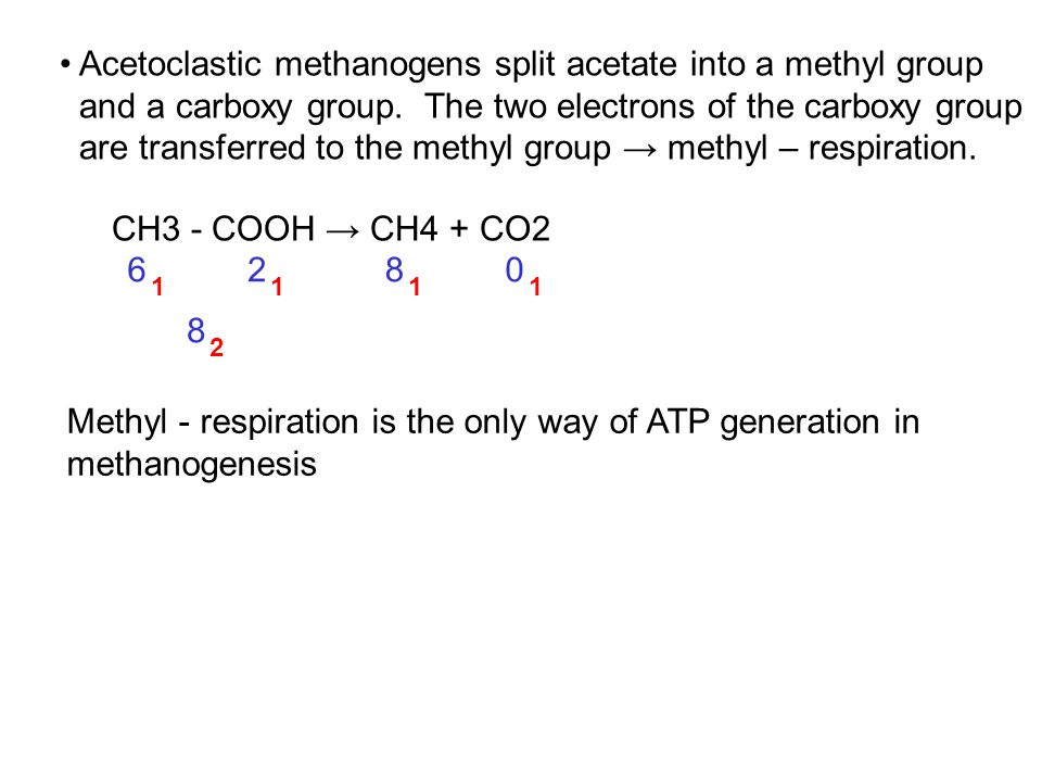 Acetoclastic methanogens split acetate into a methyl group and a carboxy group.