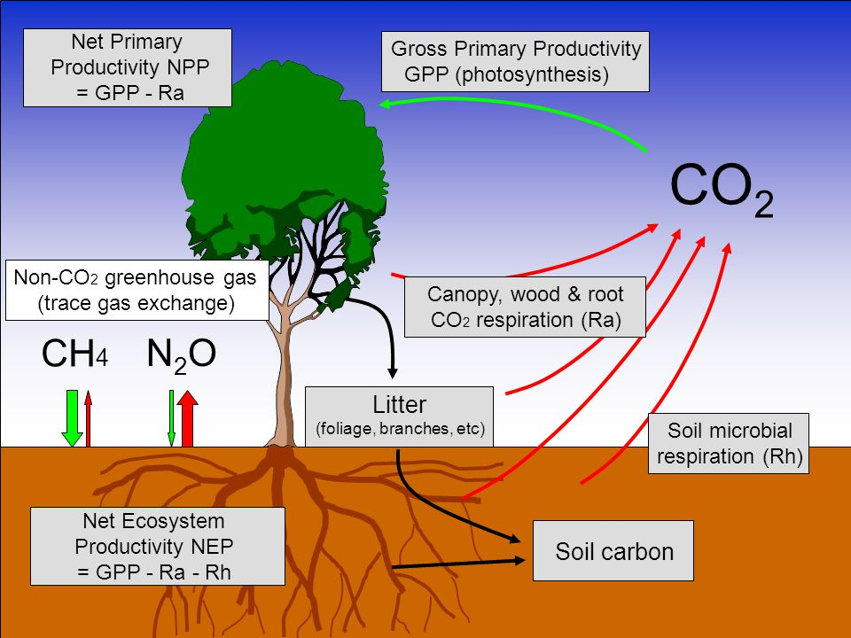 CO 2 Gross Primary Productivity GPP (photosynthesis) Litter (foliage, branches, etc) Net Primary Productivity NPP = GPP - Ra Soil microbial respiration (Rh) Soil carbon CH 4 N2ON2O Non-CO 2 greenhouse gas (trace gas exchange) Canopy, wood & root CO 2 respiration (Ra) Net Ecosystem Productivity NEP = GPP - Ra - Rh