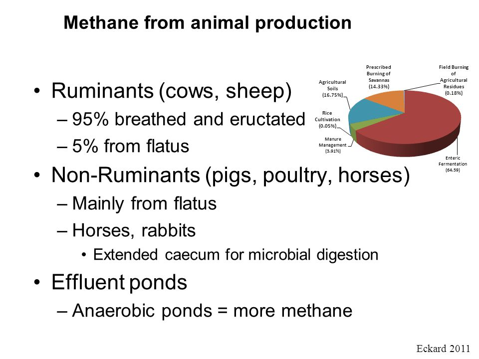 Methane from animal production Ruminants (cows, sheep) –95% breathed and eructated –5% from flatus Non-Ruminants (pigs, poultry, horses) –Mainly from flatus –Horses, rabbits Extended caecum for microbial digestion Effluent ponds –Anaerobic ponds = more methane Eckard 2011