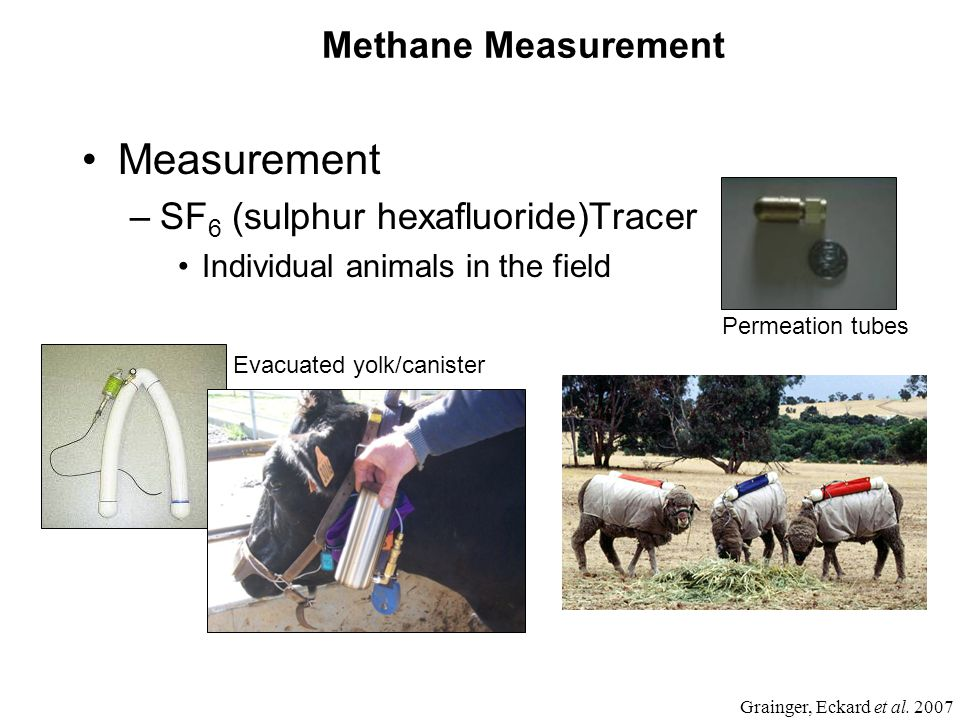 Methane Measurement Measurement –SF 6 (sulphur hexafluoride)Tracer Individual animals in the field Permeation tubes Grainger, Eckard et al.
