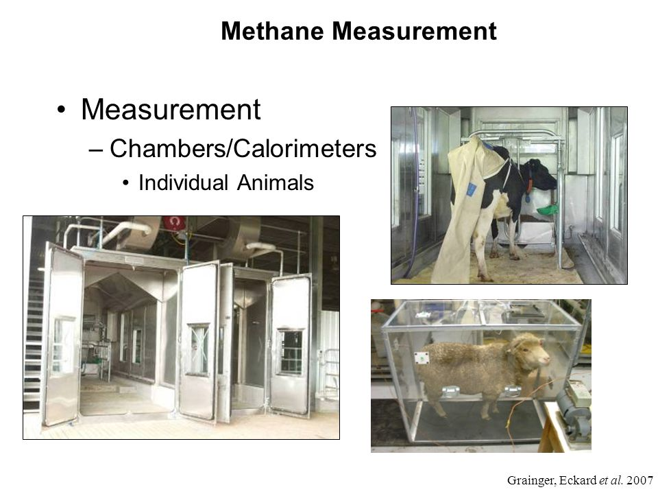 Methane Measurement Measurement –Chambers/Calorimeters Individual Animals Grainger, Eckard et al.