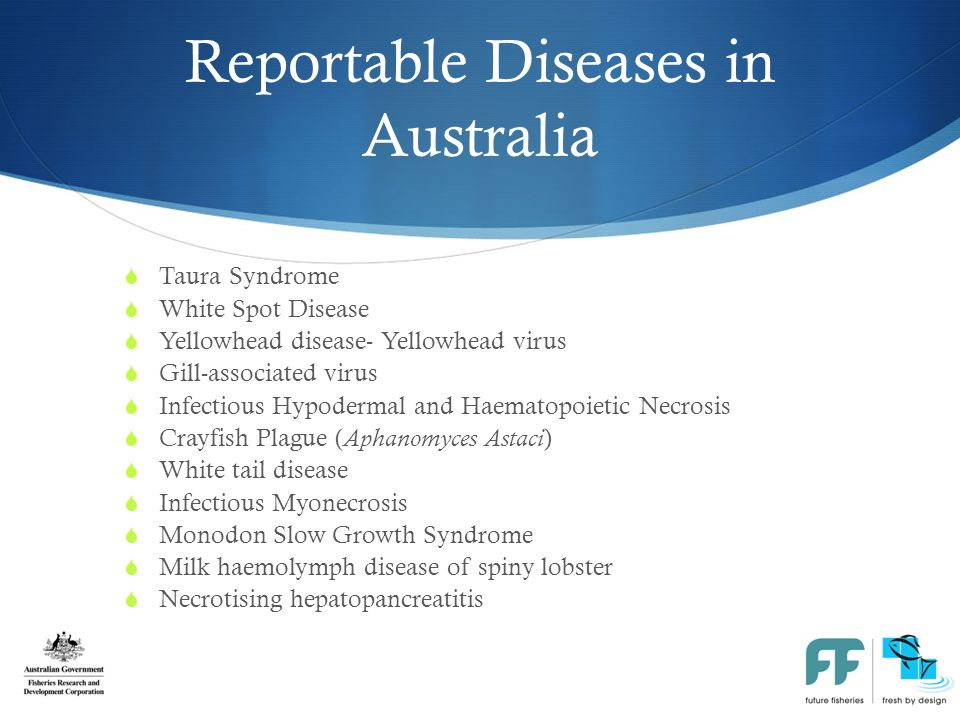 Reportable Diseases in Australia  Taura Syndrome  White Spot Disease  Yellowhead disease- Yellowhead virus  Gill-associated virus  Infectious Hypodermal and Haematopoietic Necrosis  Crayfish Plague ( Aphanomyces Astaci )  White tail disease  Infectious Myonecrosis  Monodon Slow Growth Syndrome  Milk haemolymph disease of spiny lobster  Necrotising hepatopancreatitis