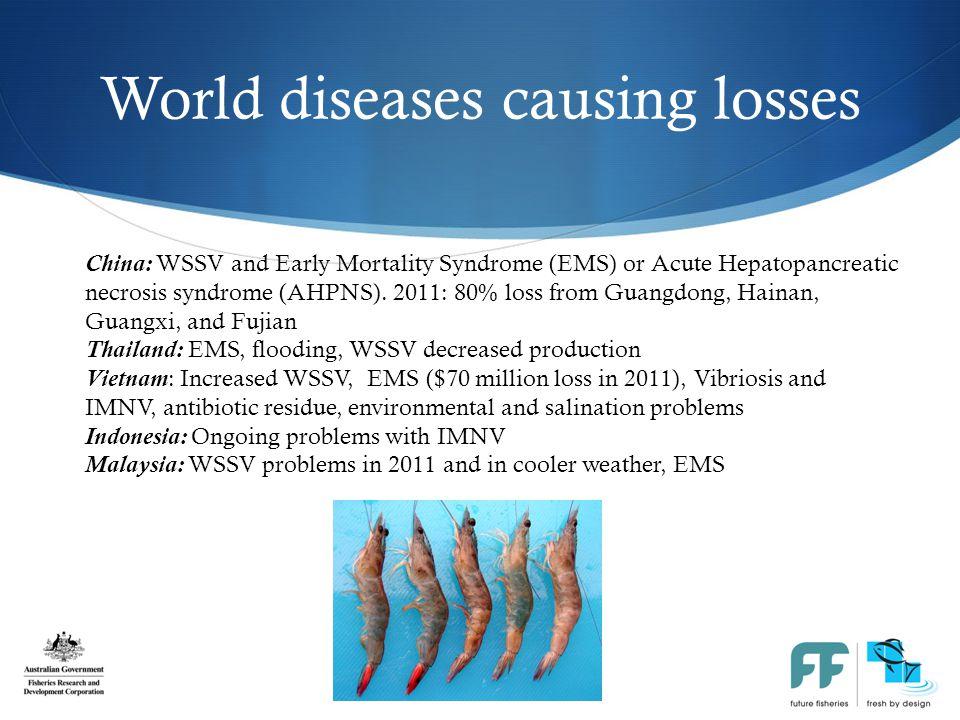 Diseases detected in Australia  Gill-associated virus (GAV)  Monodon Baculovirus (MBV)- [Spherical baculovirus]  Hepatopancreatic parvovirus (HPV) =PmergDNV densovirus  Spawner isolated mortality virus (SMV)  Mourilyan Virus (MOV)  White tail disease – Macrobrachium rosenbergi nodavirus (MrNV) Prawn Superpowers Summit 31 July 2012, QLD