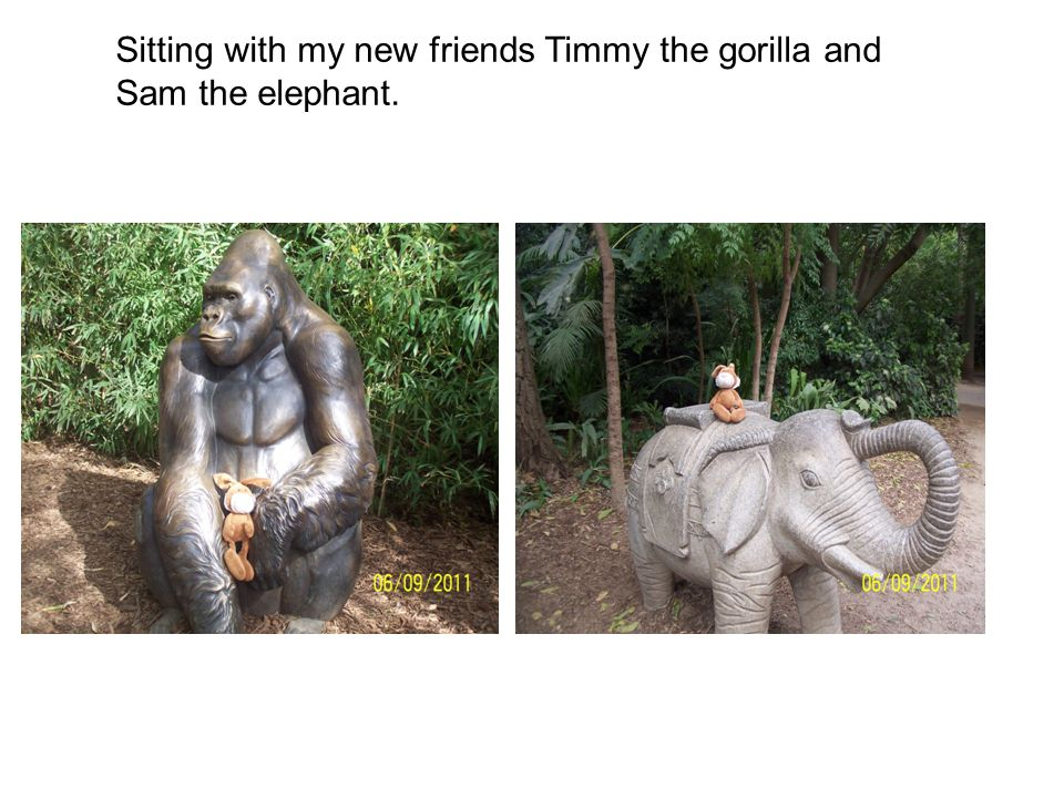 Sitting with my new friends Timmy the gorilla and Sam the elephant.