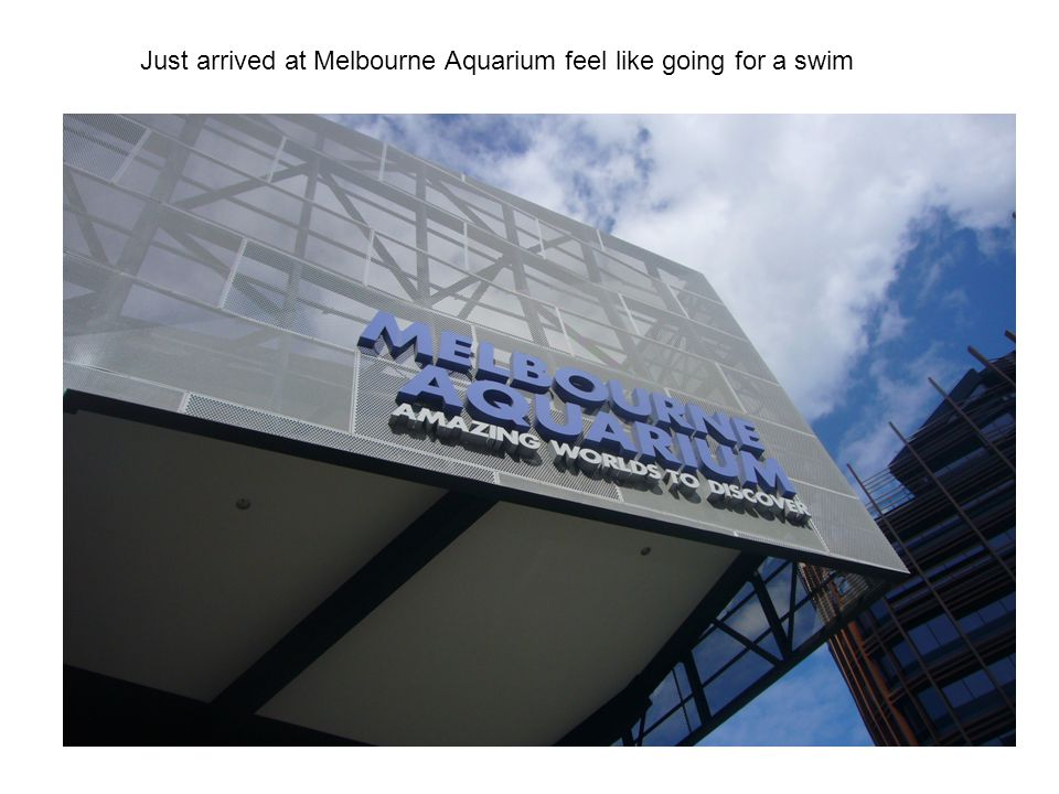 Just arrived at Melbourne Aquarium feel like going for a swim