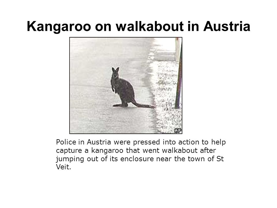 Police in Austria were pressed into action to help capture a kangaroo that went walkabout after jumping out of its enclosure near the town of St Veit.