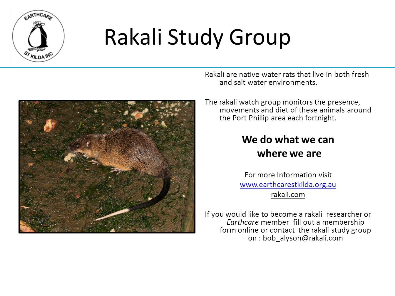 Rakali Study Group Rakali are native water rats that live in both fresh and salt water environments. The rakali watch group monitors the presence, mov