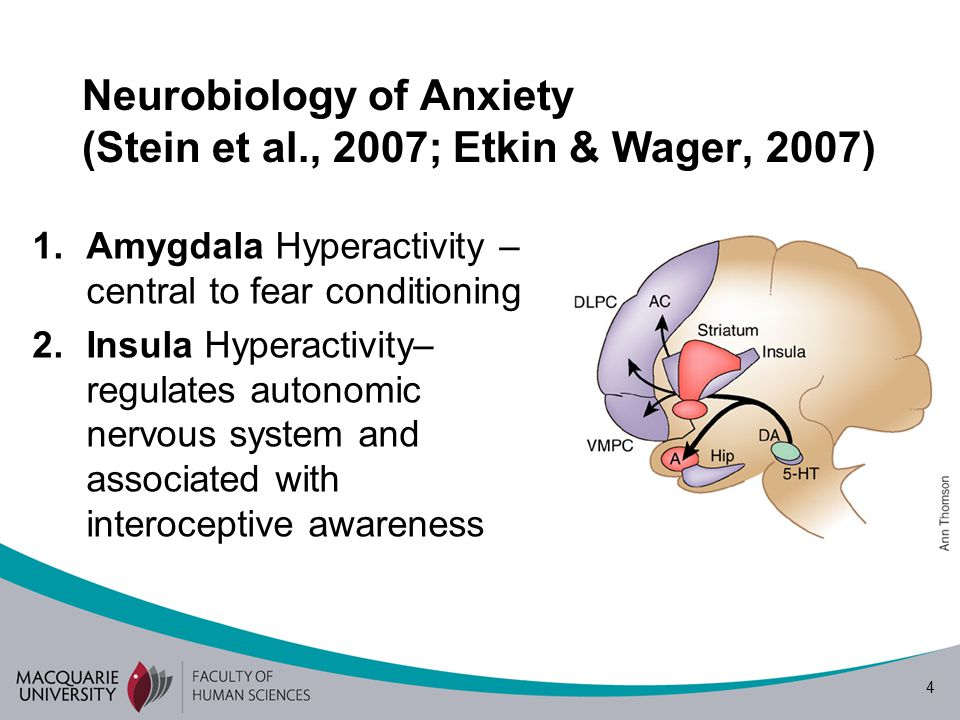 4 Neurobiology of Anxiety (Stein et al., 2007; Etkin & Wager, 2007) 1.Amygdala Hyperactivity – central to fear conditioning 2.Insula Hyperactivity– regulates autonomic nervous system and associated with interoceptive awareness