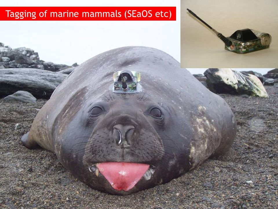 Tagging of marine mammals (SEaOS etc)