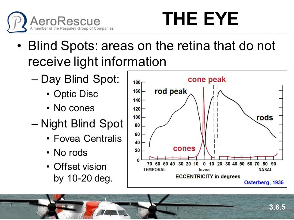 THE EYE Blind Spots: areas on the retina that do not receive light information –Day Blind Spot: Optic Disc No cones –Night Blind Spot Fovea Centralis