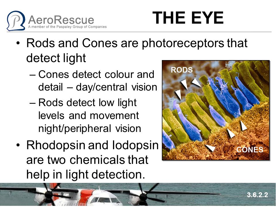 THE EYE Rods and Cones are photoreceptors that detect light –Cones detect colour and detail – day/central vision –Rods detect low light levels and mov