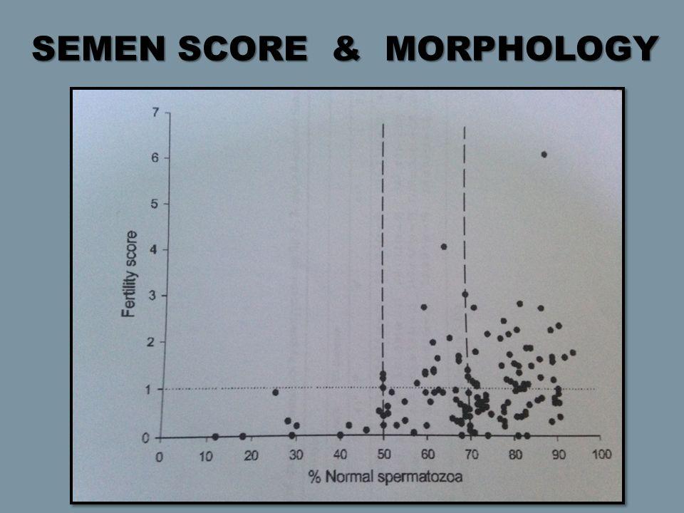 SEMEN SCORE & MORPHOLOGY