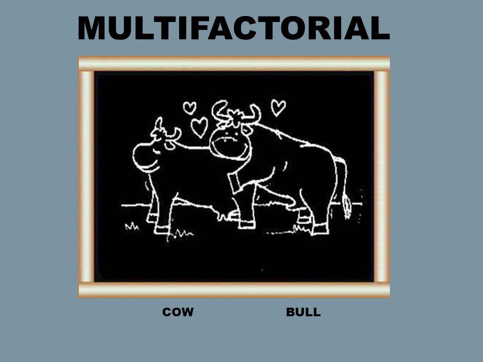 COW BULL MULTIFACTORIAL