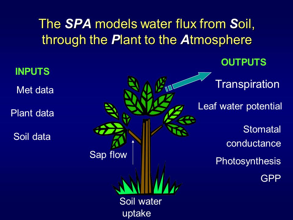 The SPA models water flux from Soil, through the Plant to the Atmosphere Plant data Soil data Soil water uptake Sap flow Leaf water potential Met data Stomatal conductance Photosynthesis GPP Transpiration INPUTS OUTPUTS