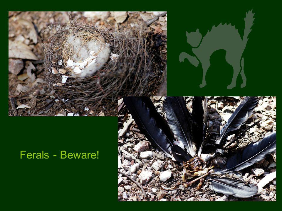 Ferals - Beware!