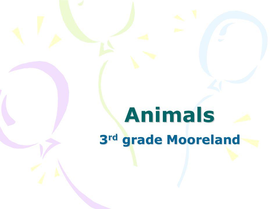 Animals 3 rd grade Mooreland
