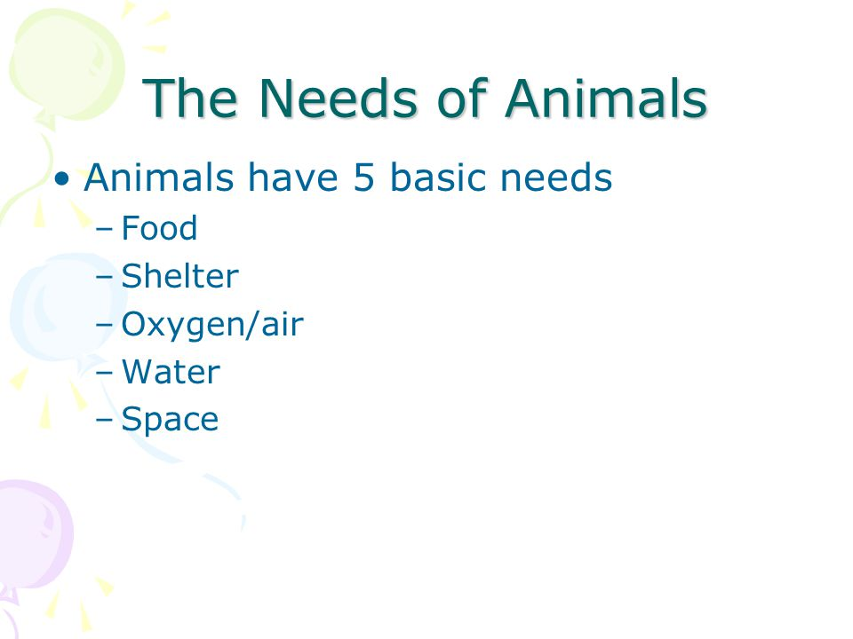 The Needs of Animals Animals have 5 basic needs –Food –Shelter –Oxygen/air –Water –Space