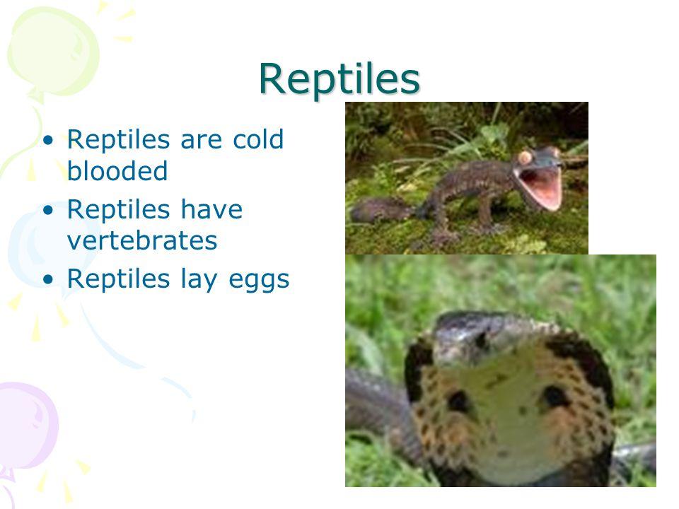 Reptiles Reptiles are cold blooded Reptiles have vertebrates Reptiles lay eggs