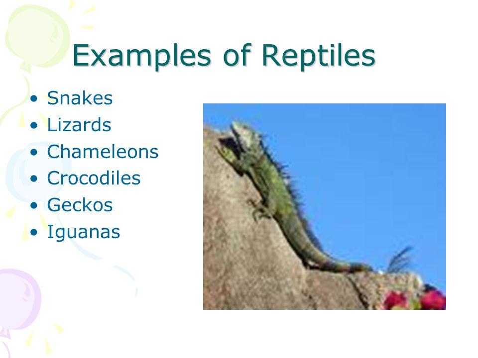 Examples of Reptiles Snakes Lizards Chameleons Crocodiles Geckos Iguanas