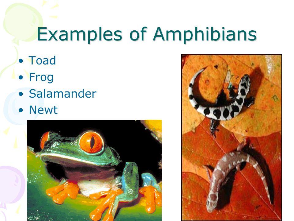 Amphibian  Definition of Amphibian by MerriamWebster