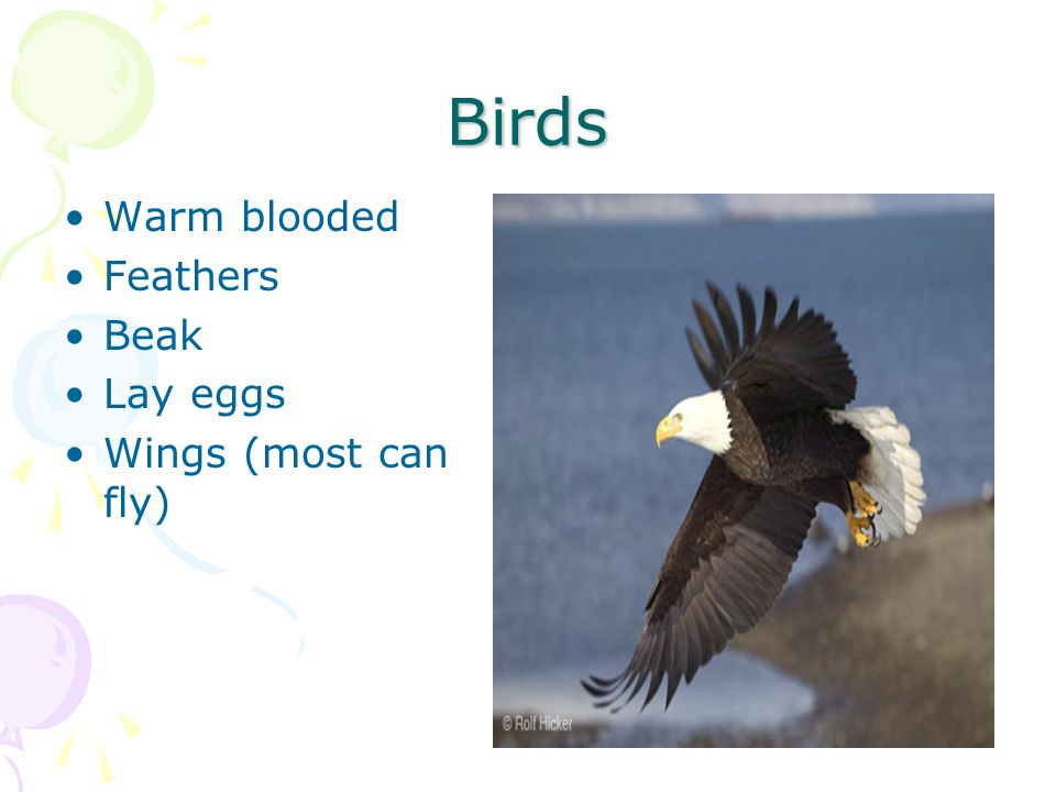 Birds Warm blooded Feathers Beak Lay eggs Wings (most can fly)
