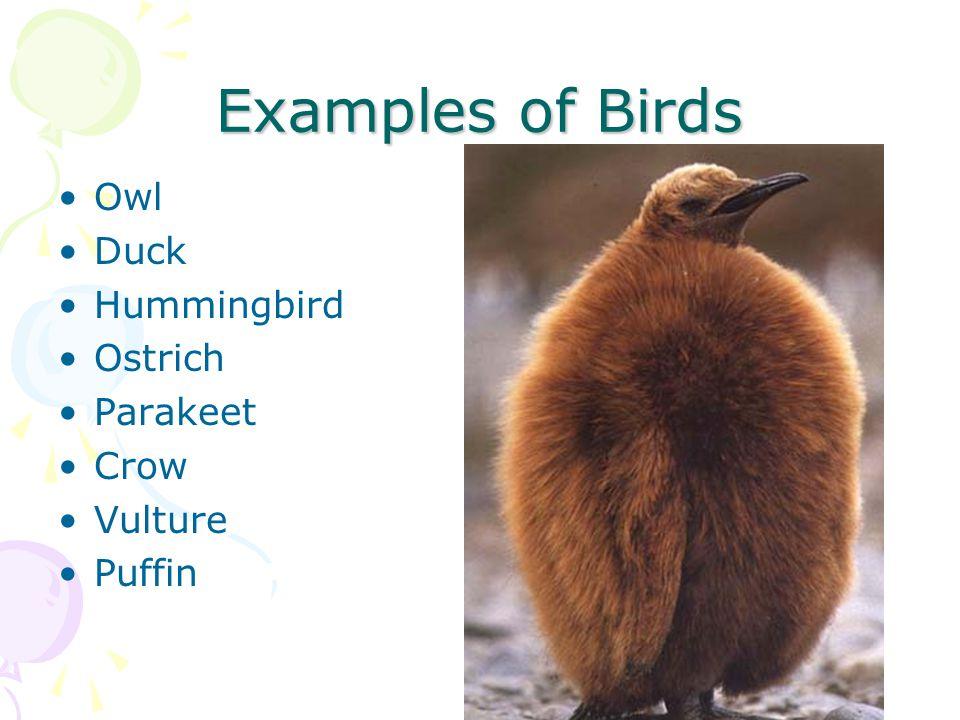 Examples of Birds Owl Duck Hummingbird Ostrich Parakeet Crow Vulture Puffin