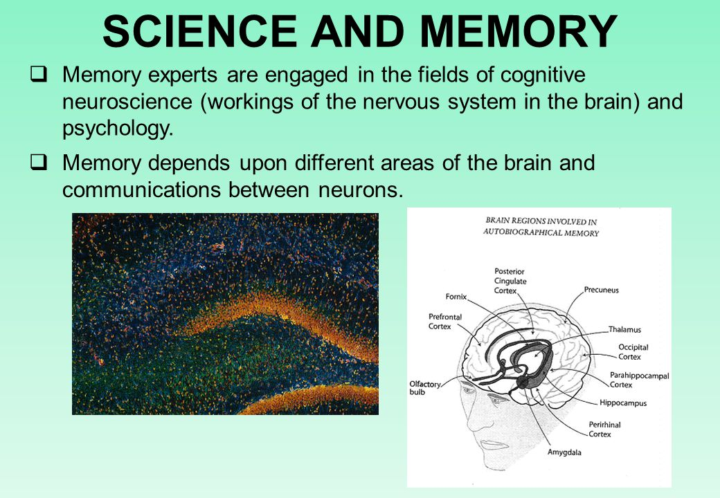 SCIENCE AND MEMORY  Memory experts are engaged in the fields of cognitive neuroscience (workings of the nervous system in the brain) and psychology.