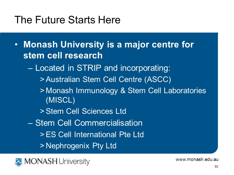 www.monash.edu.au 80 The Future Starts Here Monash University is a major centre for stem cell research –Located in STRIP and incorporating: >Australian Stem Cell Centre (ASCC) >Monash Immunology & Stem Cell Laboratories (MISCL) >Stem Cell Sciences Ltd –Stem Cell Commercialisation >ES Cell International Pte Ltd >Nephrogenix Pty Ltd