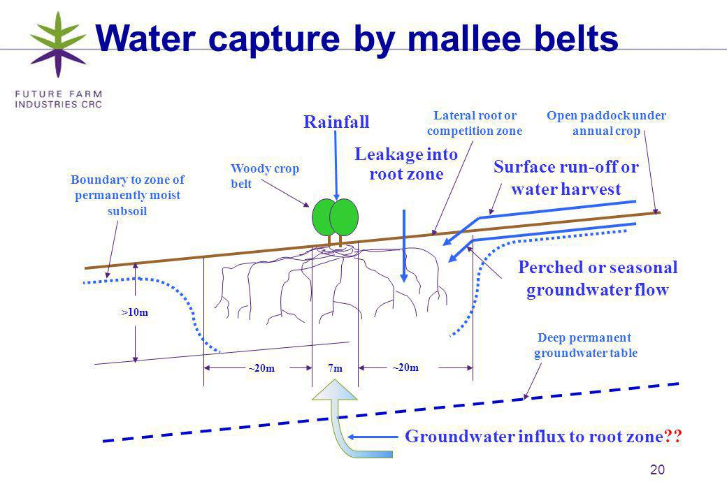 20 Surface run-off or water harvest Perched or seasonal groundwater flow Boundary to zone of permanently moist subsoil Leakage into root zone ~20m7m ~20m >10m Water capture by mallee belts Woody crop belt Rainfall Open paddock under annual crop Lateral root or competition zone Deep permanent groundwater table Groundwater influx to root zone??