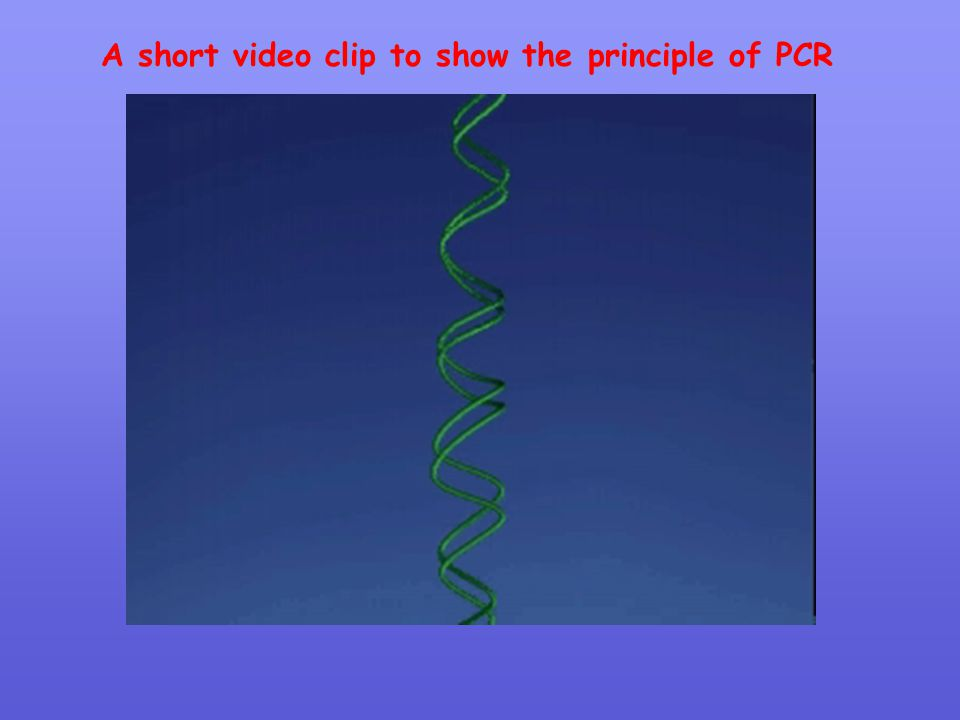 A short video clip to show the principle of PCR