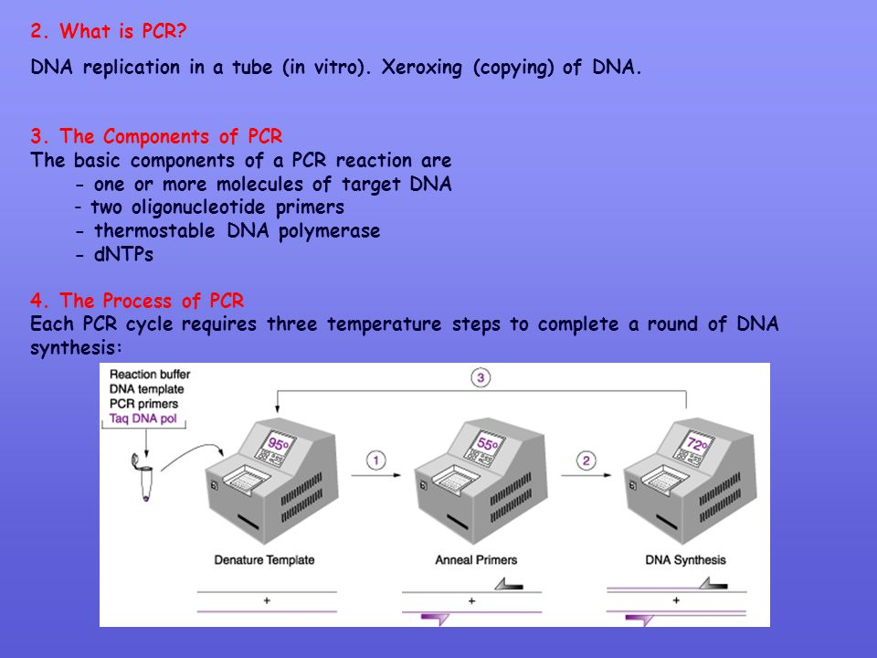 2. What is PCR? DNA replication in a tube (in vitro). Xeroxing (copying) of DNA. 3. The Components of PCR The basic components of a PCR reaction are -