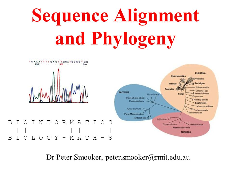 Sequence Alignment and Phylogeny Dr Peter Smooker, peter.smooker@rmit.edu.au B I O I N F O R M A T I C S | | | | | | | B I O L O G Y - M A T H - S