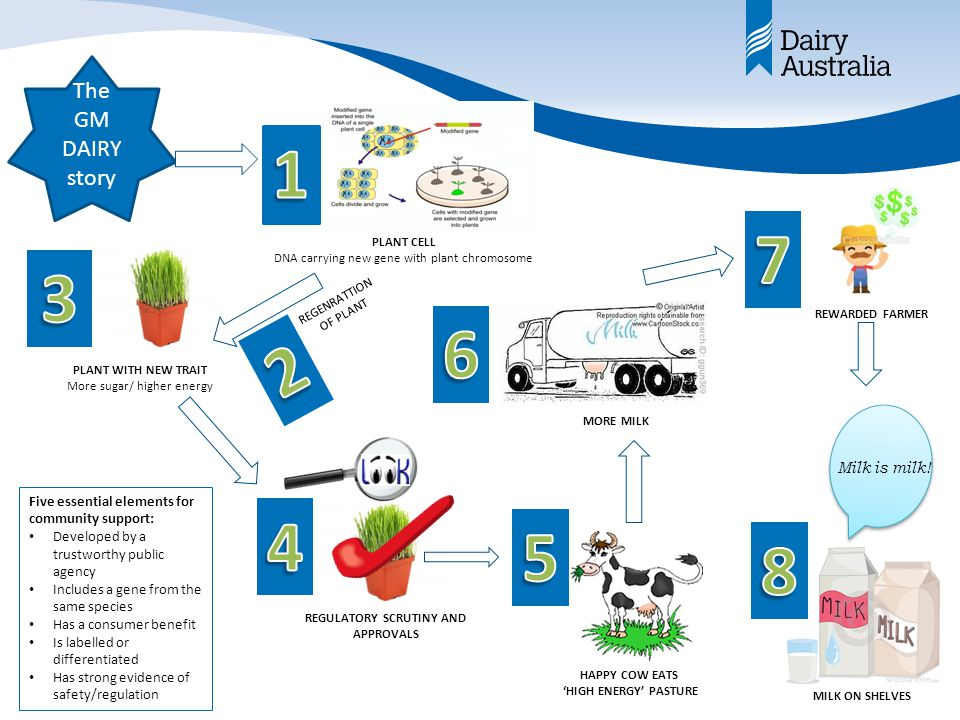 The GM DAIRY story PLANT CELL DNA carrying new gene with plant chromosome PLANT WITH NEW TRAIT More sugar/ higher energy REGENRATTION OF PLANT REGULATORY SCRUTINY AND APPROVALS HAPPY COW EATS 'HIGH ENERGY' PASTURE MORE MILK REWARDED FARMER MILK ON SHELVES Milk is milk.