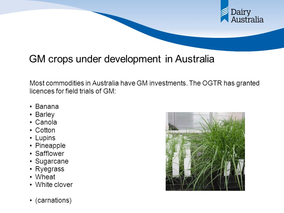 Most advanced Australian R&D EntityLicenceCropDetails BSESDIR 96 (2009) SugarcaneHerbicide tolerance BSESDIR 95 (2009) SugarcaneAltered plant growth, enhanced drought tolerance, enhanced nitrogen use efficiency, altered sucrose accumulation, and improved cellulosic ethanol production from sugarcane biomass UQDIR 78 (2008) SugarcaneAltered sugar production BSESDIR 70 (2007) SugarcaneAltered plant architecture, enhanced water or improved nitrogen use efficiency UQDIR 51 (2005) SugarcaneExpressing sucrose isomerase EntityLicenceCropDetails Vic DPIDIR 89 (2008) White cloverAMV resistant Vic DPIDIR 82 (2007) Ryegrass & tall fescue Improved forage qualities Vic DPIDIR 47 (2003) White cloverAMV resistant