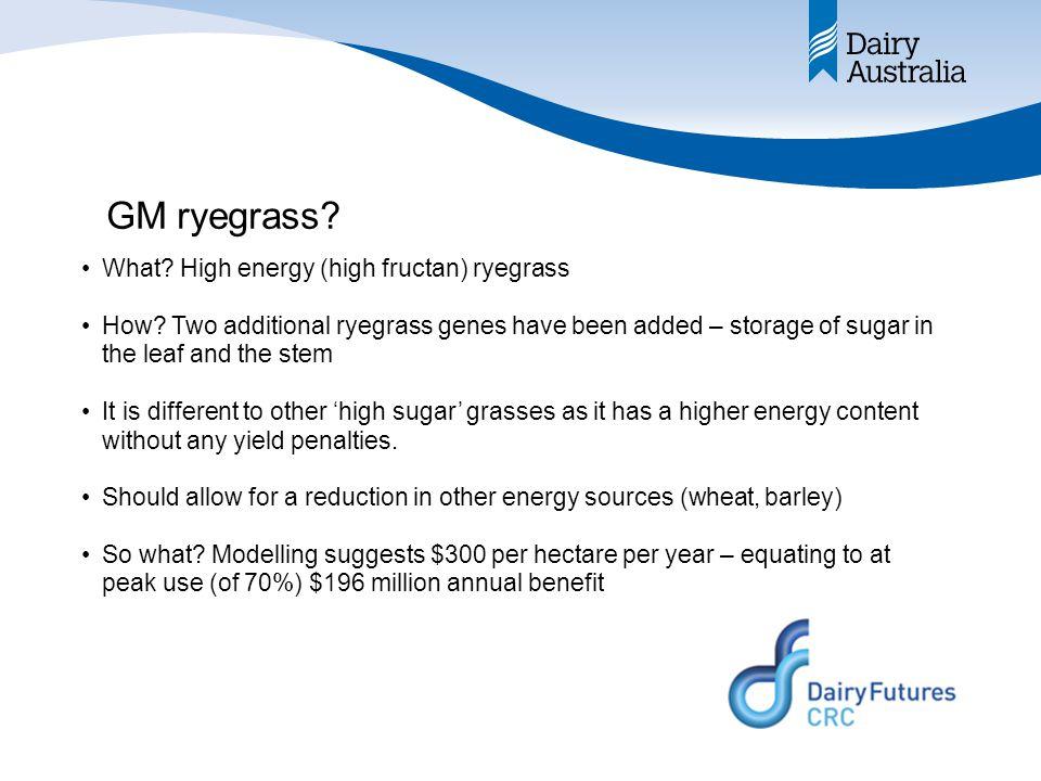 GM ryegrass. What. High energy (high fructan) ryegrass How.