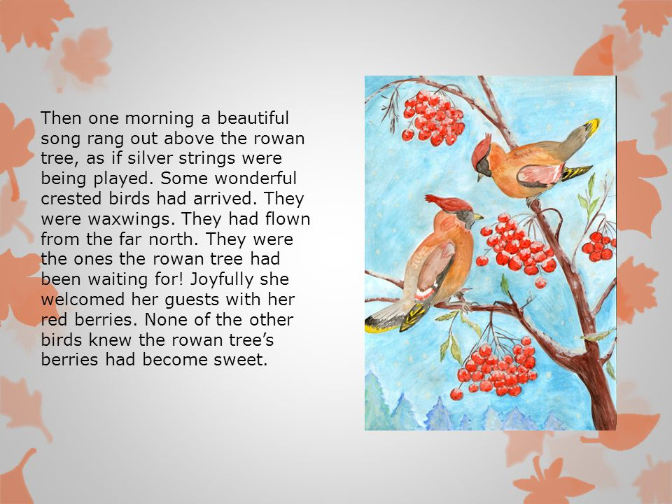 Then one morning a beautiful song rang out above the rowan tree, as if silver strings were being played.