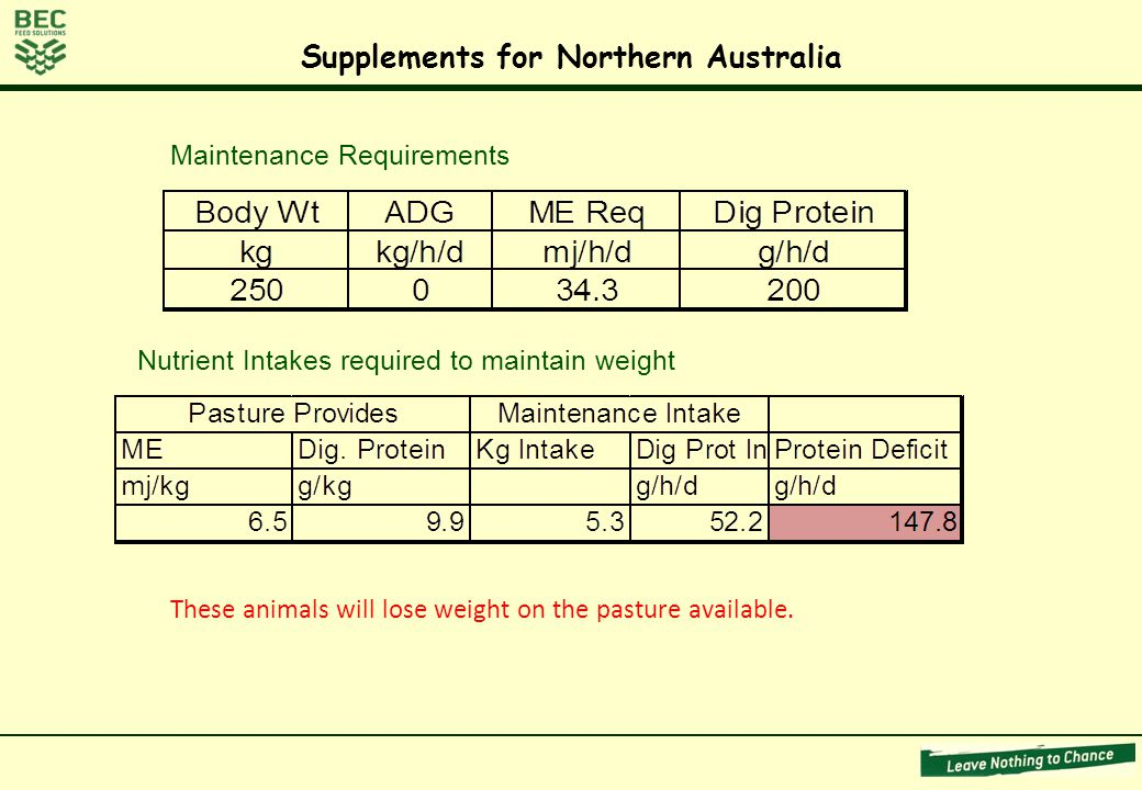 Maintenance Requirements Nutrient Intakes required to maintain weight These animals will lose weight on the pasture available.
