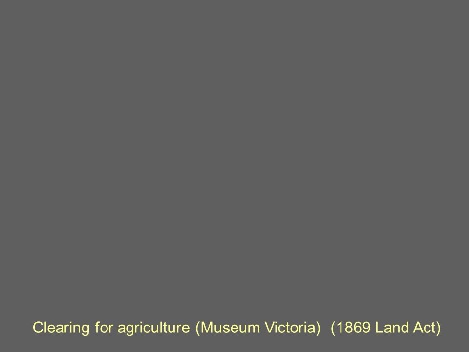 Clearing for agriculture (Museum Victoria) (1869 Land Act)